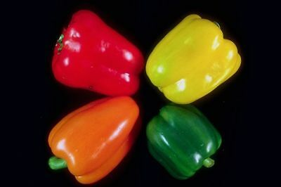SWEETEST RED,YELLOW,GREEN,ORANGE BELL PEPPER SEEDS (20 SEEDS ) strawberry sweet