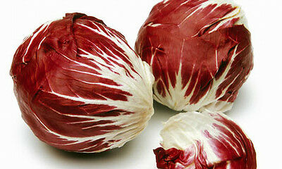 Chicory / Endive RED PALLA ROSSA 400 Seeds (HEIRLOOM / ORGANIC) Radicchio