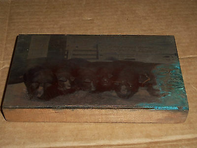 c. Old Printing Block Metal on Wood Pigs in a Sty  About 4 1/4 x 7 1/8 Inches