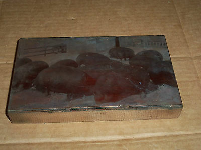 a. Old Printing Block Metal on Wood Swine of Pigs about 4 1/4 x 7 1/8 Inches