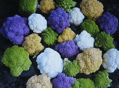 Rainbow Blend Cauliflower * Broccoli * Mixed Colors* 150 SEEDS * Healthful*