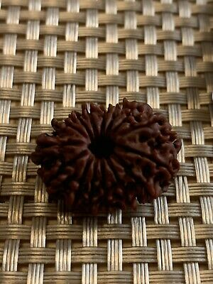 Nepalese Fifteen 15 Mukhi Facet Collector Rudraksha Rarest Power Bead Rudraksh