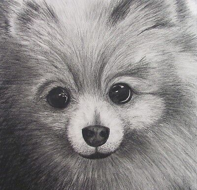 Dog, Cat, Bird, Pet portrait/ drawings signed direct from artist