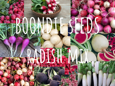 RADISH Heirloom Mix 100+ seeds vegetable garden EASY TO GROW ALL YEAR all types