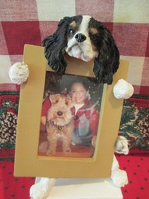 Cavalier King Charles Tri Color  Picture Frame #19