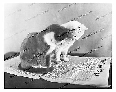 """1910s era vintage photo-Two cats reading the paper-""""The New Age""""-8x10 in"""