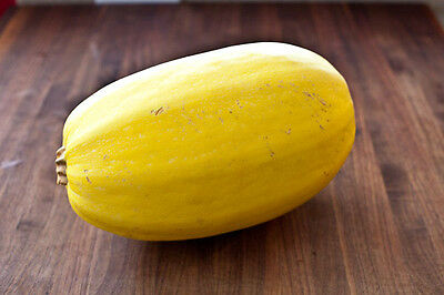 Squash VEGETABLE SPAGHETTI 10 Seeds (HEIRLOOM / ORGANIC) Fruit