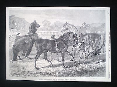 Old Equestrian Print - Middle Park Horse Stables Eltham Blair Athol Etc 1870