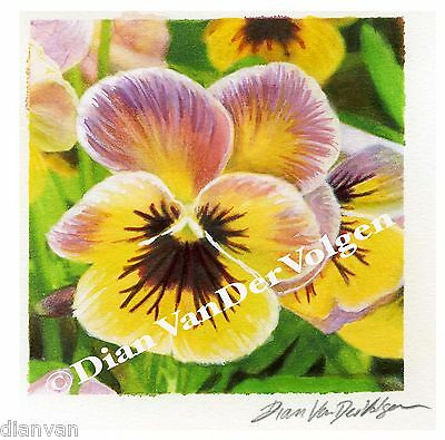 Yellow and Pink Pansies Original Watercolor Painting