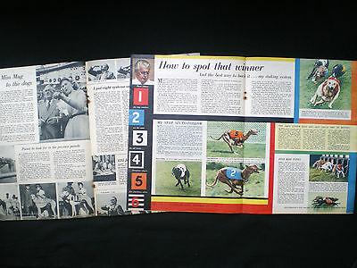Greyhound Racing Macdonald Daly Tic-Tac Bookmaker Old Article 1955