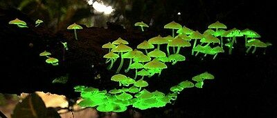 Glow in the Dark Mushroom Growing Habitat Kit Project