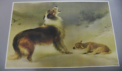 "picture vtg COLLIE FINDS LAMB SNOW VINTAGE PRINT~FOUND~11x8""~as grandma had"