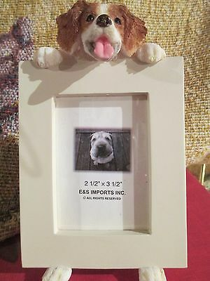 Brittany Spaniel ~ Picture Frame #58