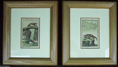 Superb Collectible Print Set Framed French Antique Bat Engravings – 19Th Century