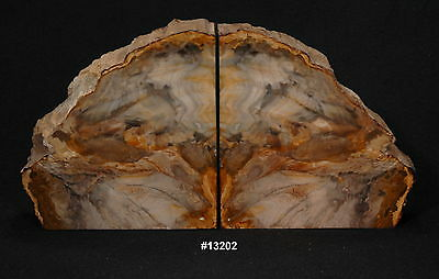 "Exquisite Petrified Wood Bookends15 7/8"" wide,8 3/8"" high,1 7/8"" thick 17.2 lbs."