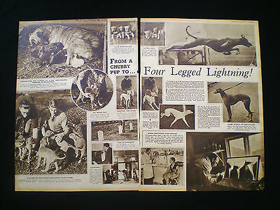 GREYHOUND RACING HOOK KENNELS NORTHAW HERTFORDSHIRE 2pp ARTICLE 1936