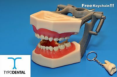 Dental Pediatric Typodont Model 760 works with Columbia brand teeth