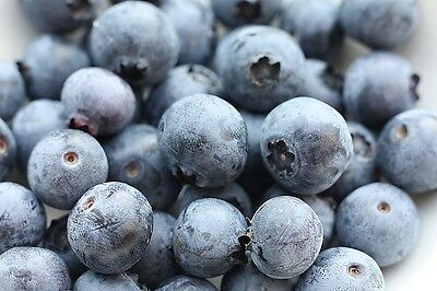 Southern Blueberry Bulk1000 Seeds * Evergreen Shrub * High Tolerance To Heat *