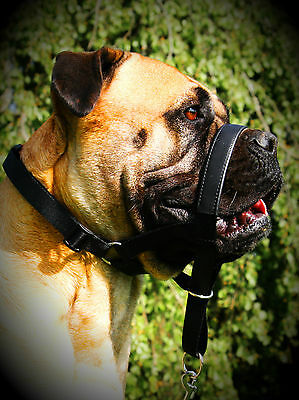 High Quality Padded Head Collar Stops Dogs Pulling Halter Training Nose Reigns