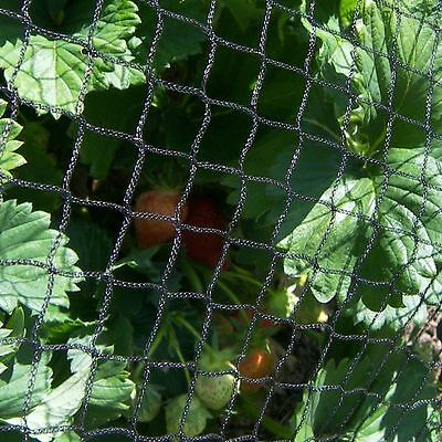 Anti Bird Crop Veg Netting Protection Plants Ponds Fruit 2m Wide Per Metre