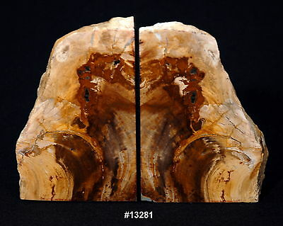 """Exquisite Petrified Wood Bookends 8 5/8"""" wide 6 1/2 """" high 1 5/8"""" thick 6.2 lbs."""