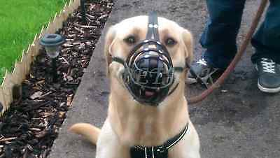 New Light leather Dog Muzzle  Labrador  and  Other Similar Snout
