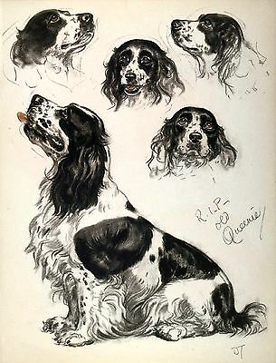 ENGLISH SPRINGER SPANIEL BEAUTIFUL Vintage Dog Print 1944 Diana Thorne