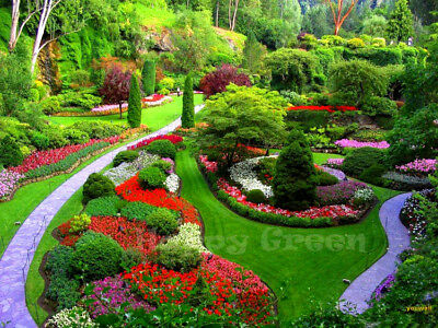 Japanese Flower Garden - 0.5g - SEEDS - Semi-tall mix in delicate colours