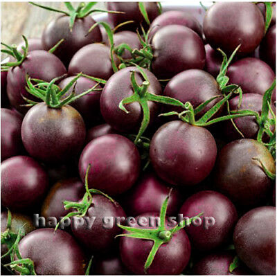 VEGETABLE TOMATO BLACK CHERRY 220 SEEDS - Tomato seeds