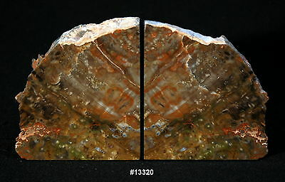 """Exquisite Petrified Wood Bookends 9 3/4"""" wide 5 3/8"""" high 2 1/8"""" thick 8.4 lbs."""