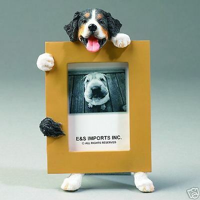 Bernese Mountain Dog ~ Picture Frame  #15-52