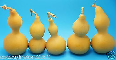 Free ship from China!NICE&DRIED&CLEANED BOTTLE GOURDS best size Moderately Thick