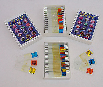 24 Prepared Slide for all Microscopes 12 INSECTS and 12 BOTANY