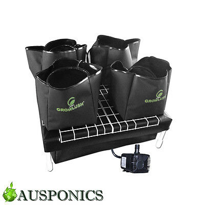 GROWLUSH HYDROPONICS WATER SYSTEM 60 Grow Room System With 9L Pots & Water Pump