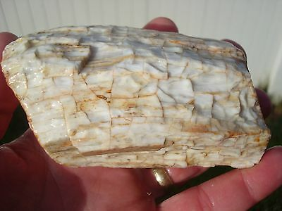 DETAILED PETRIFIED WOOD ROUND LIMB ROUGH IN AGATE WITH OPAL BARK - OWYHEE MTNS!