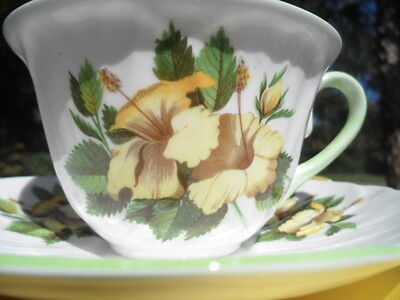 Shelley  Oleander  *  Yellow   Hibiscus Cup And Saucer - Green Trim  *    #0444