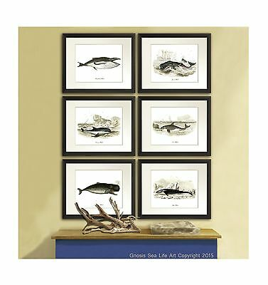 Antique Whale Art Prints set of 6 Nautical Boy bedroom Decor Wall Hanging Wall