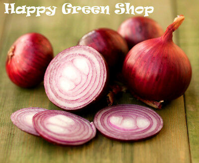 Vegetable - Onion  Red - Wenta - 1300 Seeds - Mild - Mid Late