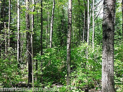 84 ACRES NORTHERN MINNESOTA FORESTED PROPERTY PRIVATE GATE 8 MI FRM BIG FALLS
