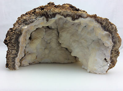 Large Agatized Fossil Coral Specimen-27,Metaphysical Crystal Healing, Decoration