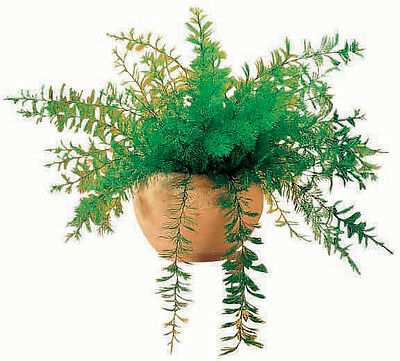 Miles Kimball Mysterious Air Fern
