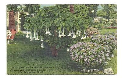 Rare Datura Arborea Fort Lauderdale Florida Posted 1948 Vintage Postcard