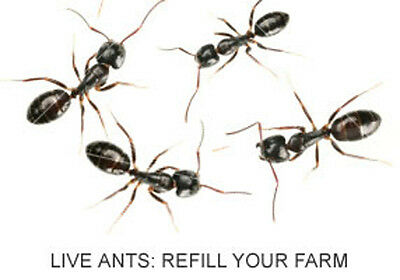 LIVE Ants - 2 tubes 25 LIVE Ants: FREE Coupon for Ants to Refill your Ant Farm