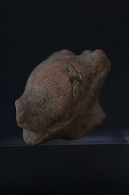 Pre-Columbian Animal Head Fragment