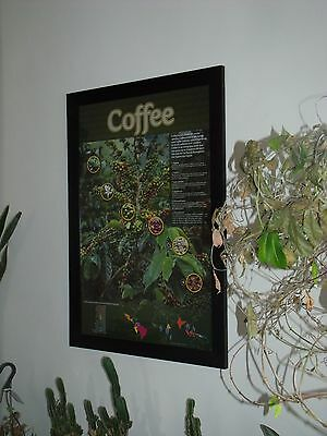Coffee Tree Poster Education Espresso Barista Art Restaurant 24X36 poster only