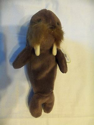 TY Beanie Babies Walrus ** JOLLY ** 4th Generation New w/ Tag