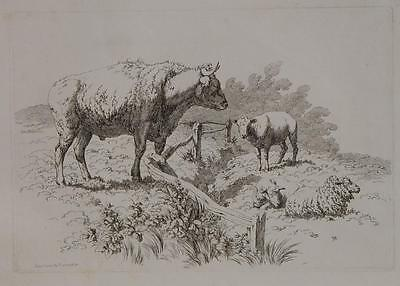 Robert Hills Islington London Rinder Ochse Schafe Weide cattle Pastorale sheep