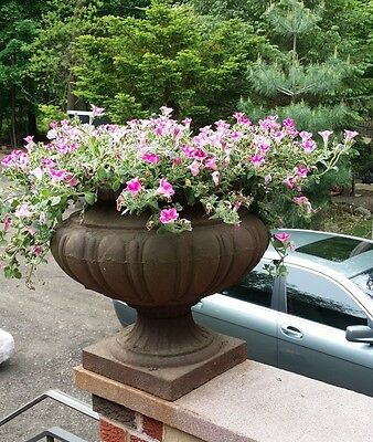 Antique cast iron planters
