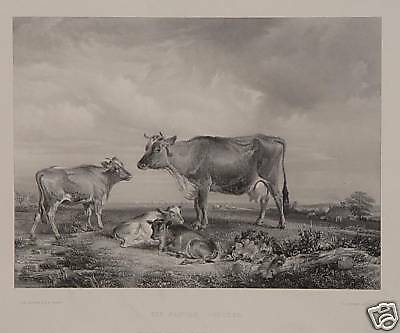 Thomas Sidney Cooper Pastorale Kuh Kühe Isle of Wight Cow Ox Scotland England