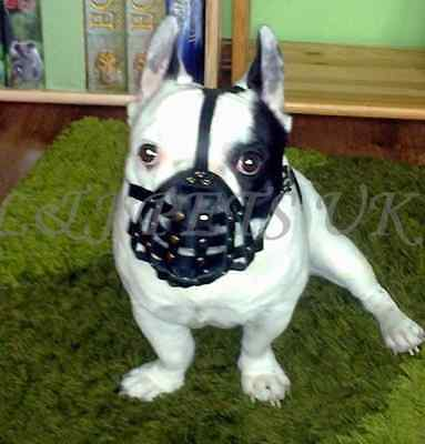 "Light leather Dog Muzzle for French Bulldog  ""Frenchies"""